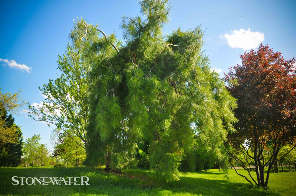 Stonewater Landscape Features 2020-14